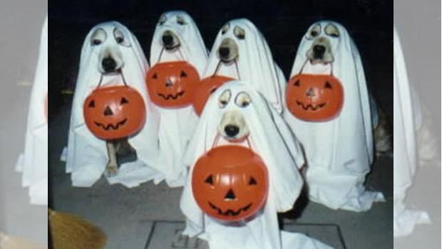 disfraz perros fantasma