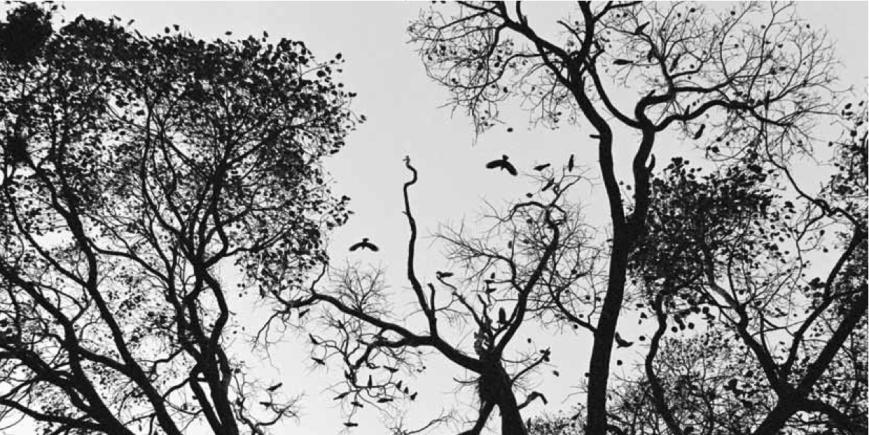 """Llueven manchas de tiempo"" de Carla Andrade @ Casa das Artes, Vigo | Vigo | Galicia | España"